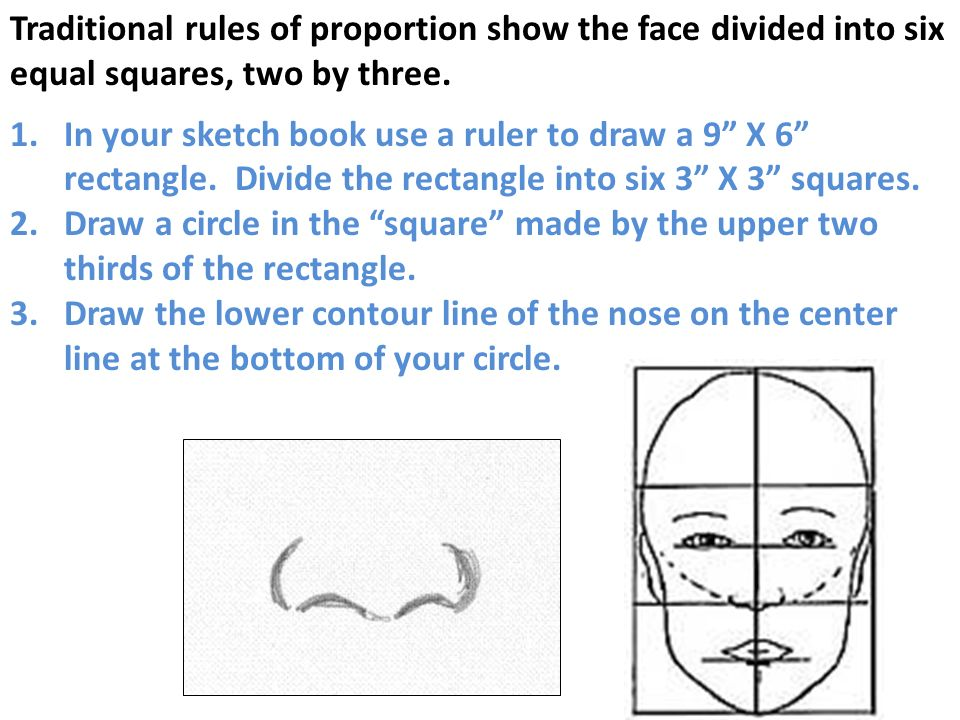 Traditional rules of proportion show the face divided into six equal squares, two by three.
