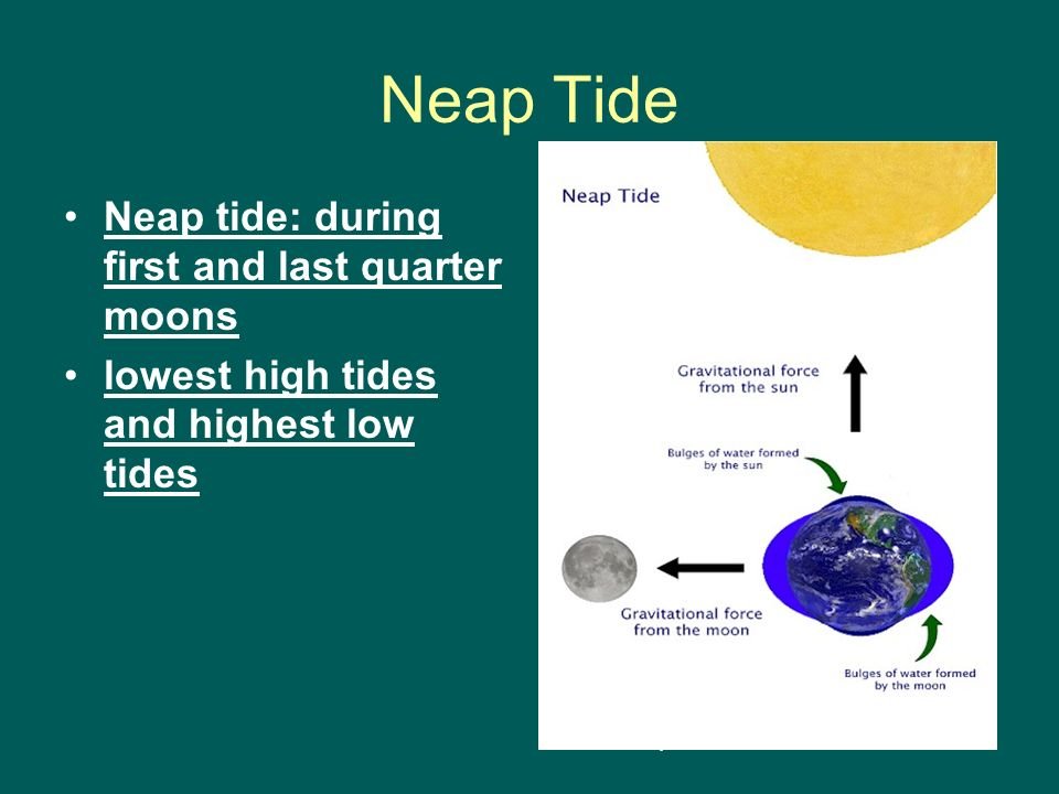 Neap Tide Neap tide: during first and last quarter moons lowest high tides and highest low tides http://www.huntsmanmarine.ca
