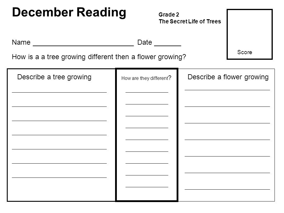 December Reading Grade 2 The Secret Life of Trees How are they different .