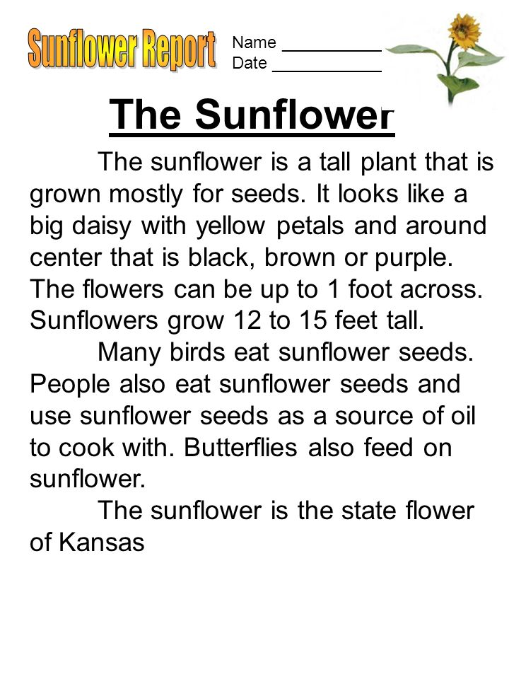Name ______________ Date ________________ The Sunflower The sunflower is a tall plant that is grown mostly for seeds.