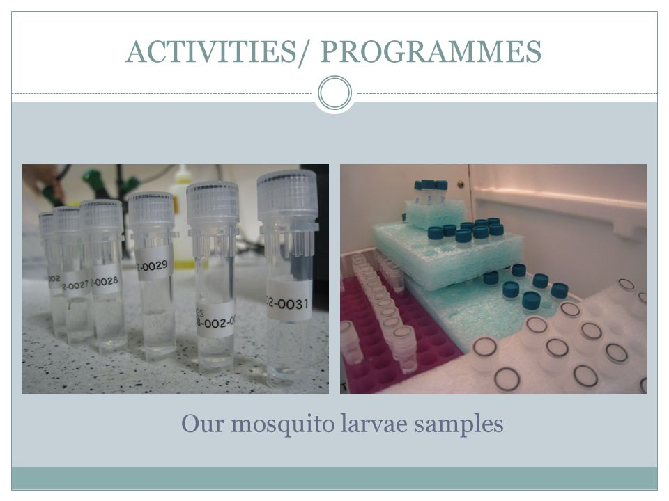 ACTIVITIES/ PROGRAMMES Our mosquito larvae samples