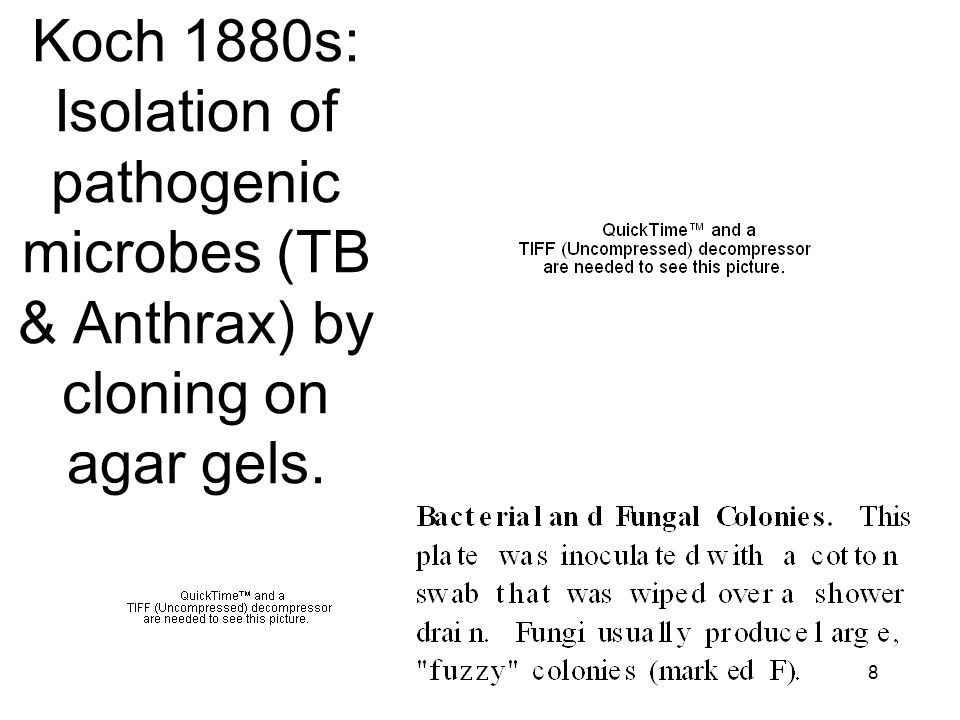 8 Koch 1880s: Isolation of pathogenic microbes (TB & Anthrax) by cloning on agar gels.