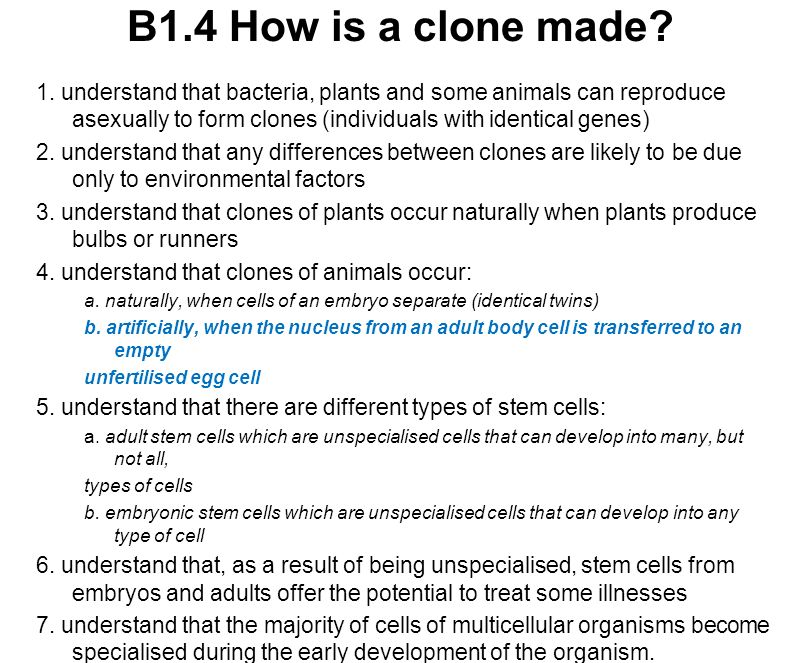 B1.4 How is a clone made? 1. understand that bacteria, plants and some animals can reproduce asexually to form clones (individuals with identical gene