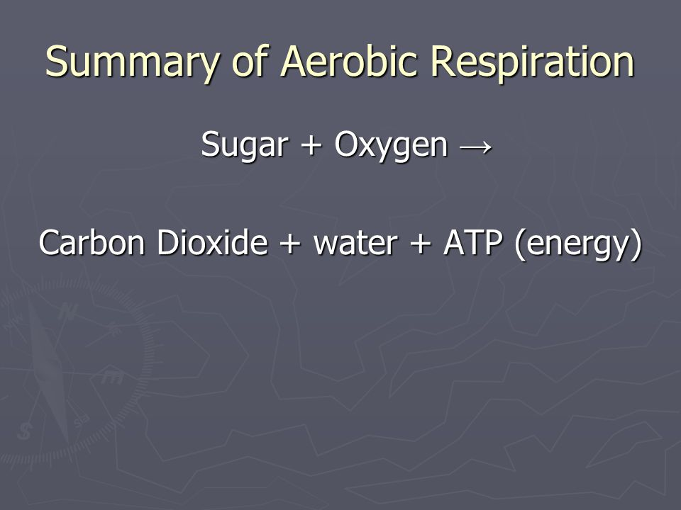Summary of Aerobic Respiration Sugar + Oxygen Sugar + Oxygen Carbon Dioxide + water + ATP (energy)