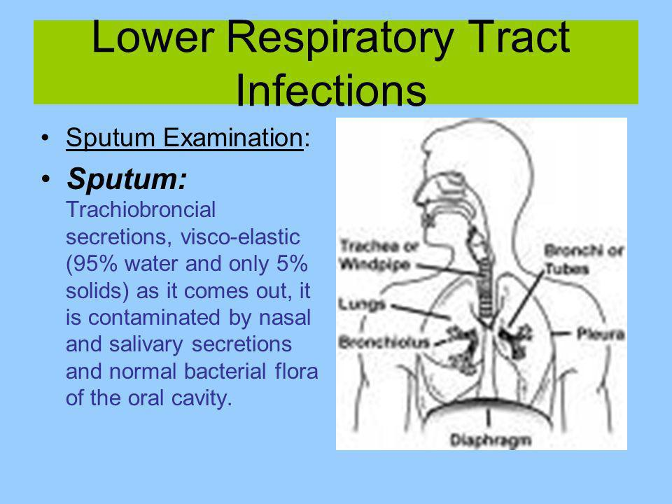 Lower Respiratory Tract Infections Sputum Examination: Sputum: Trachiobroncial secretions, visco-elastic (95% water and only 5% solids) as it comes ou