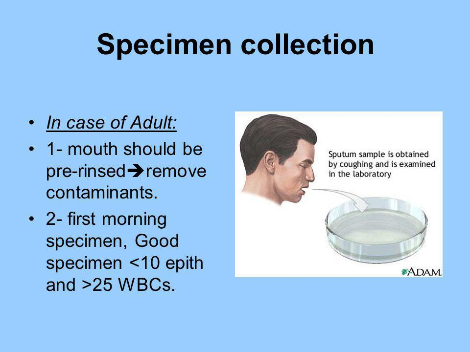 Specimen collection In case of Adult: 1- mouth should be pre-rinsed remove contaminants. 2- first morning specimen, Good specimen 25 WBCs.