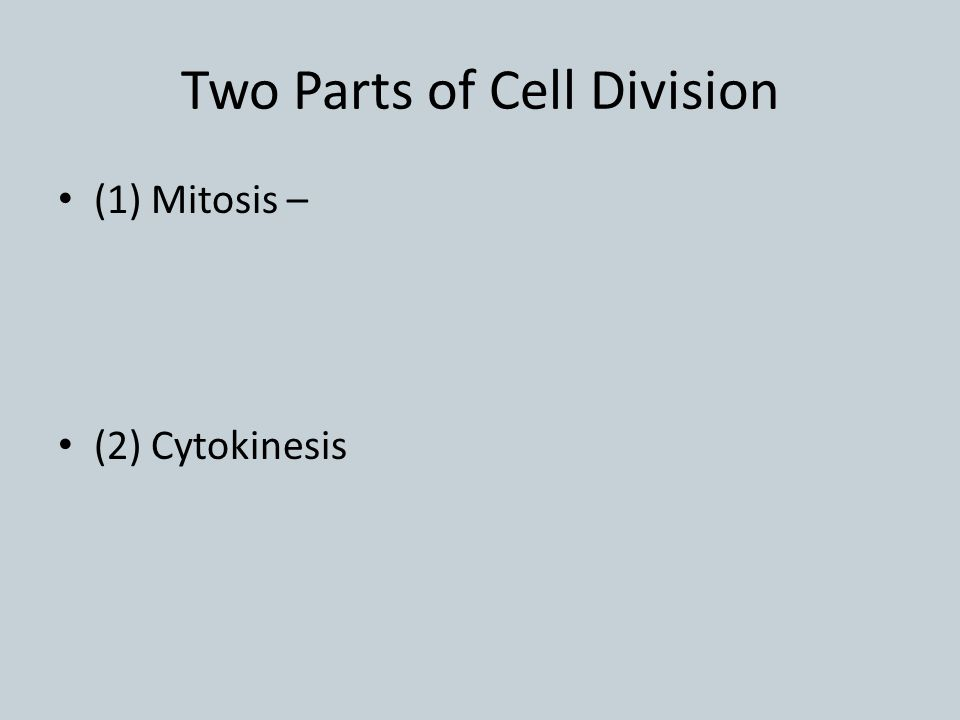 Two Parts of Cell Division (1) Mitosis – (2) Cytokinesis