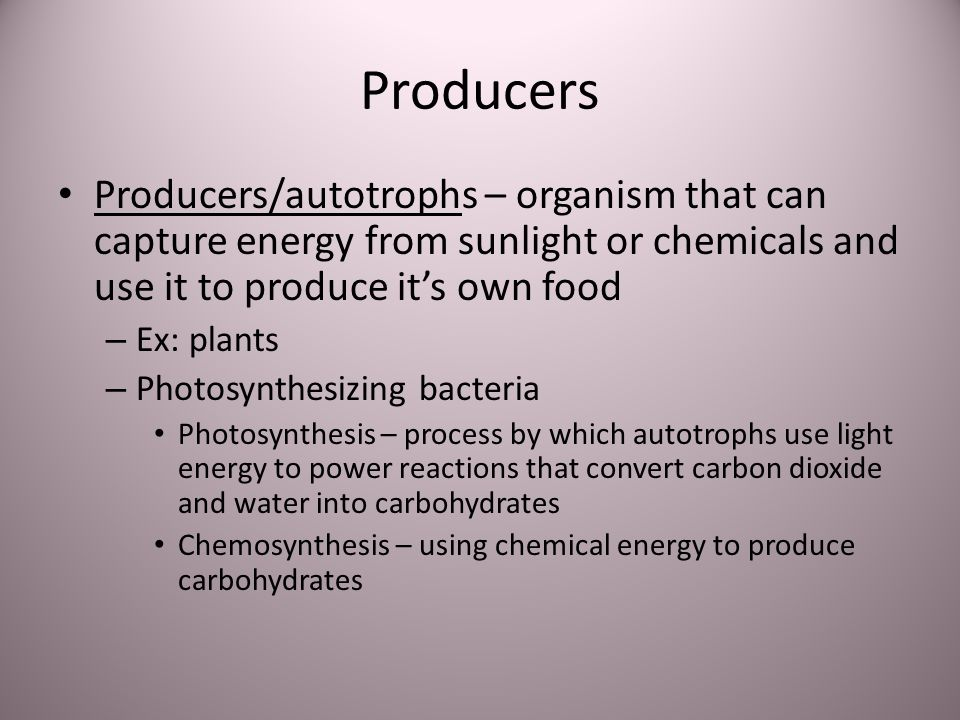 Producers Producers/autotrophs – organism that can capture energy from sunlight or chemicals and use it to produce its own food – Ex: plants – Photosy