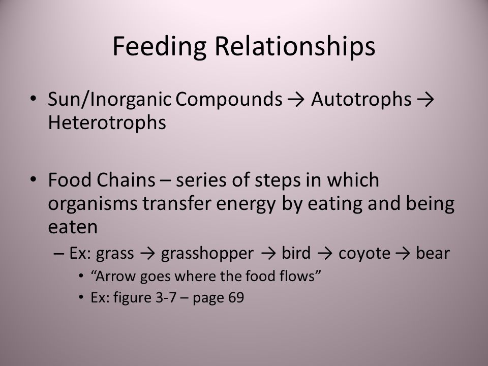 Feeding Relationships Sun/Inorganic Compounds Autotrophs Heterotrophs Food Chains – series of steps in which organisms transfer energy by eating and b