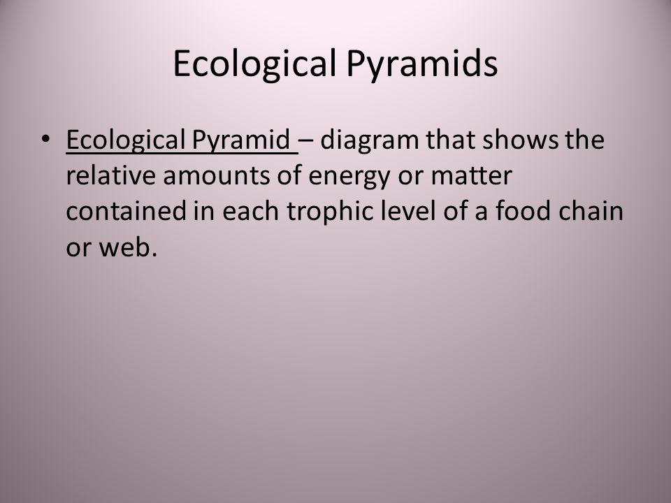 Ecological Pyramids Ecological Pyramid – diagram that shows the relative amounts of energy or matter contained in each trophic level of a food chain o