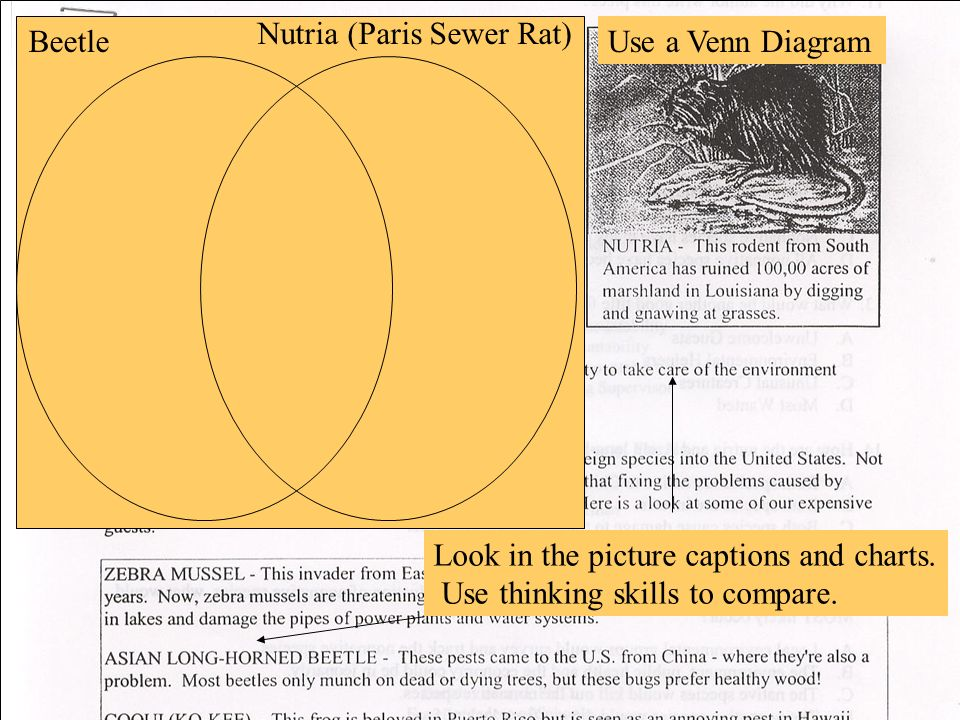 Look in the picture captions and charts. Use thinking skills to compare. Beetle Nutria (Paris Sewer Rat) Use a Venn Diagram