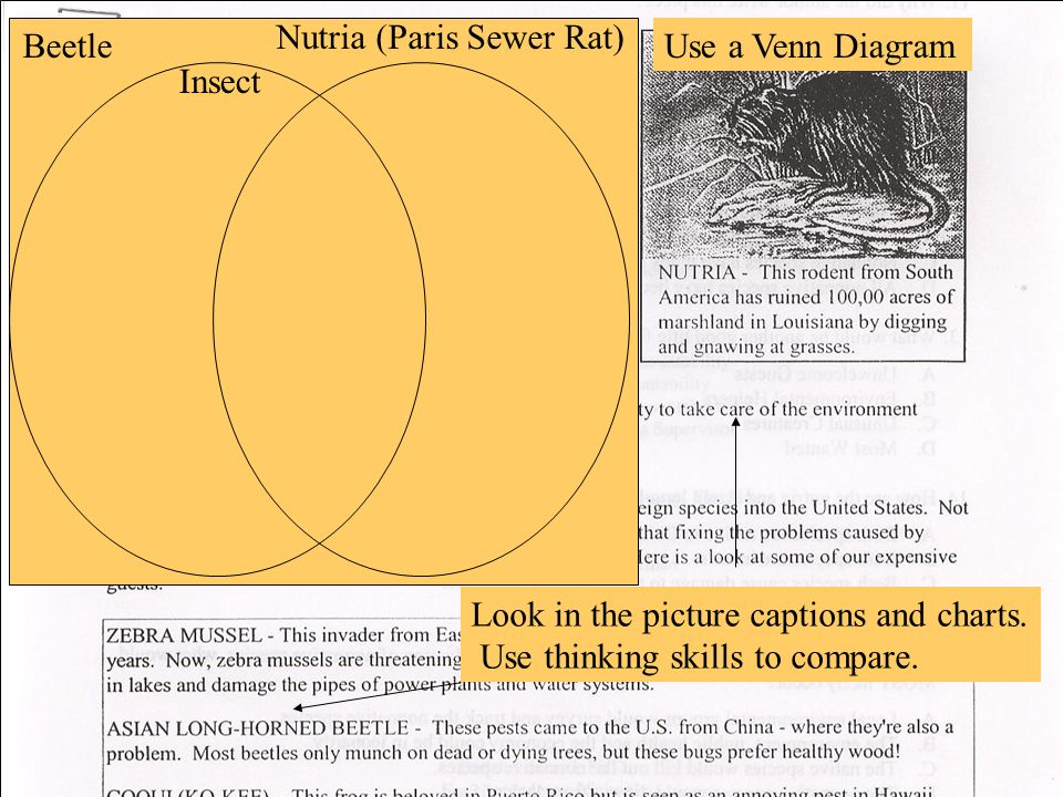 Look in the picture captions and charts. Use thinking skills to compare. Beetle Nutria (Paris Sewer Rat) Use a Venn Diagram Insect