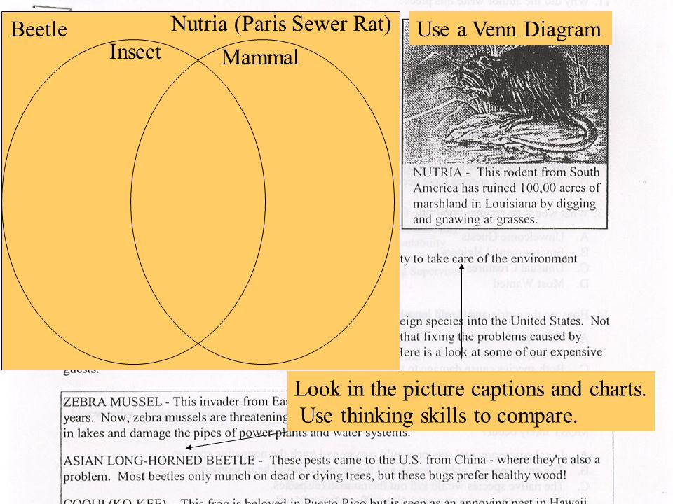 Look in the picture captions and charts. Use thinking skills to compare. Beetle Nutria (Paris Sewer Rat) Use a Venn Diagram Insect Mammal