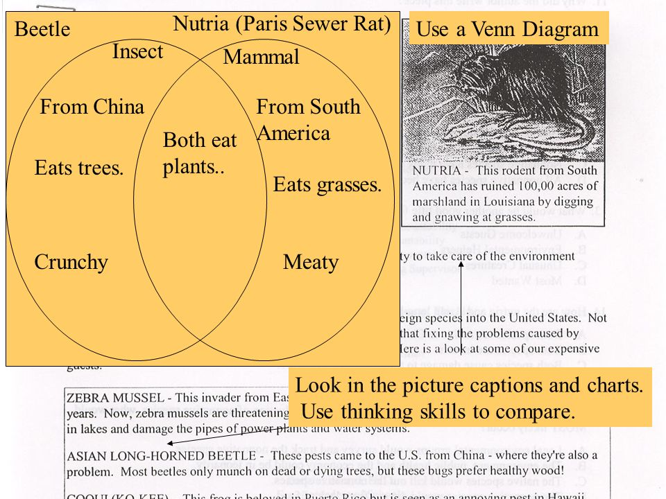 Look in the picture captions and charts. Use thinking skills to compare. Beetle Nutria (Paris Sewer Rat) Use a Venn Diagram Insect Mammal From South A