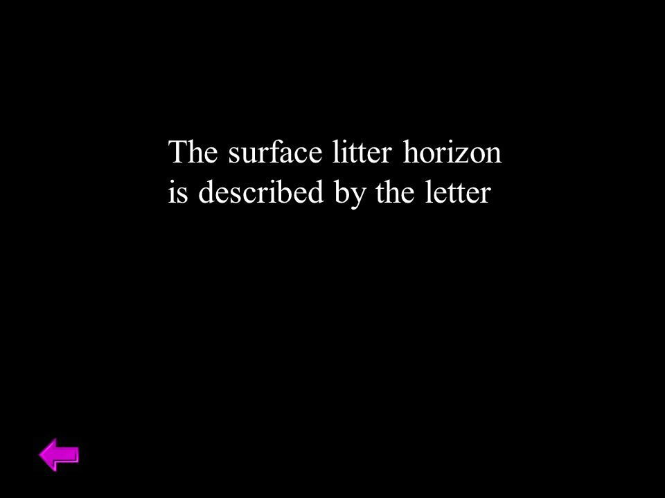 The surface litter horizon is described by the letter