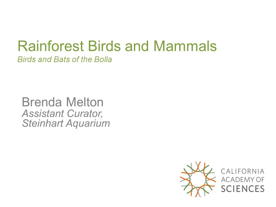 Rainforest Birds and Mammals Birds and Bats of the Bolla Brenda Melton Assistant Curator, Steinhart Aquarium