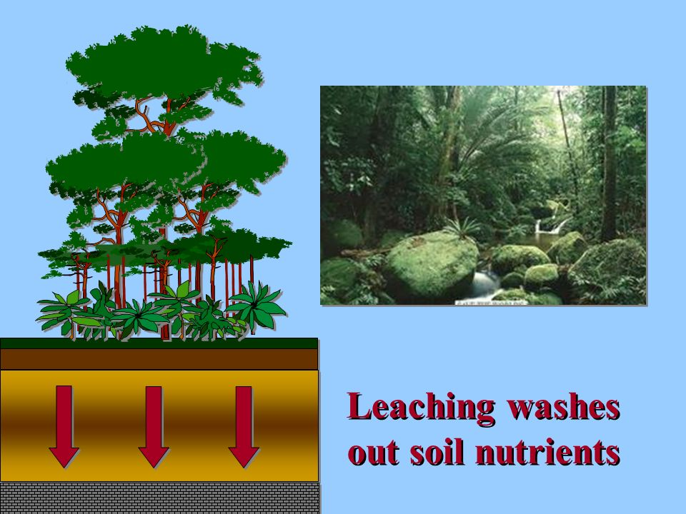 Leaching washes out soil nutrients Leaching washes out soil nutrients