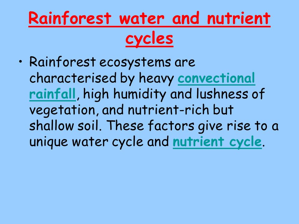 Rainforest water and nutrient cycles Rainforest ecosystems are characterised by heavy convectional rainfall, high humidity and lushness of vegetation,