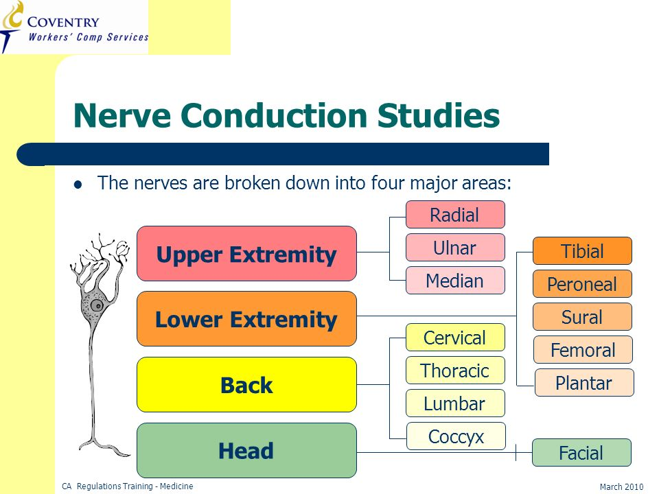 CA Regulations Training - Medicine March 2010 Nerve Conduction Studies The nerves are broken down into four major areas: Head Back Lower Extremity Upp