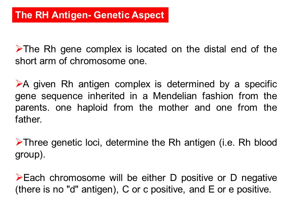 The RH Antigen- Genetic Aspect The Rh gene complex is located on the distal end of the short arm of chromosome one. A given Rh antigen complex is dete