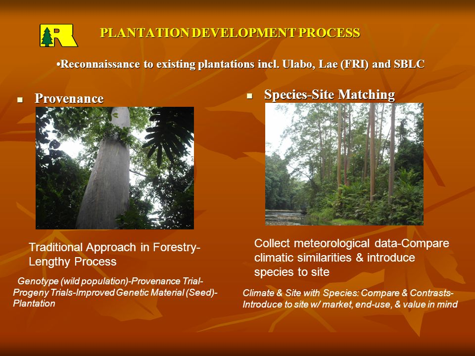PLANTATION DEVELOPMENT PROCESSReconnaissance to existing plantations incl.