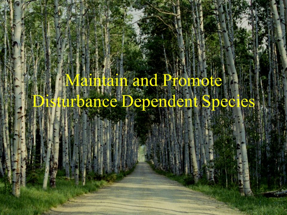 Maintain and Promote Disturbance Dependent Species