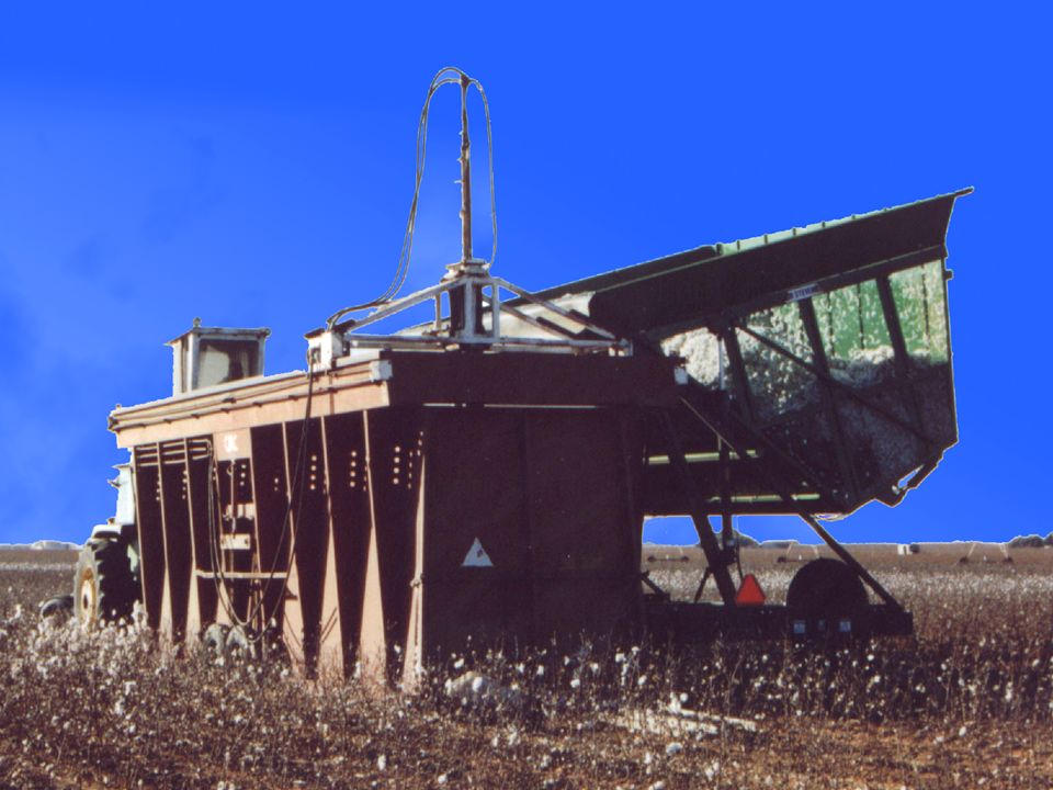 The Process Cotton Pickers or Brush Strippers harvest cotton six or eight rows of cotton at a time Cotton is stored in baskets above the harvester Cot