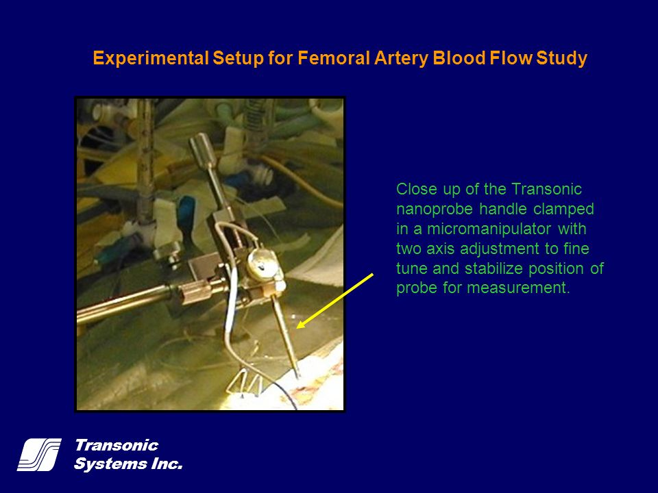 Transonic Systems Inc. Experimental Setup for Femoral Artery Blood Flow Study Close up of the Transonic nanoprobe handle clamped in a micromanipulator
