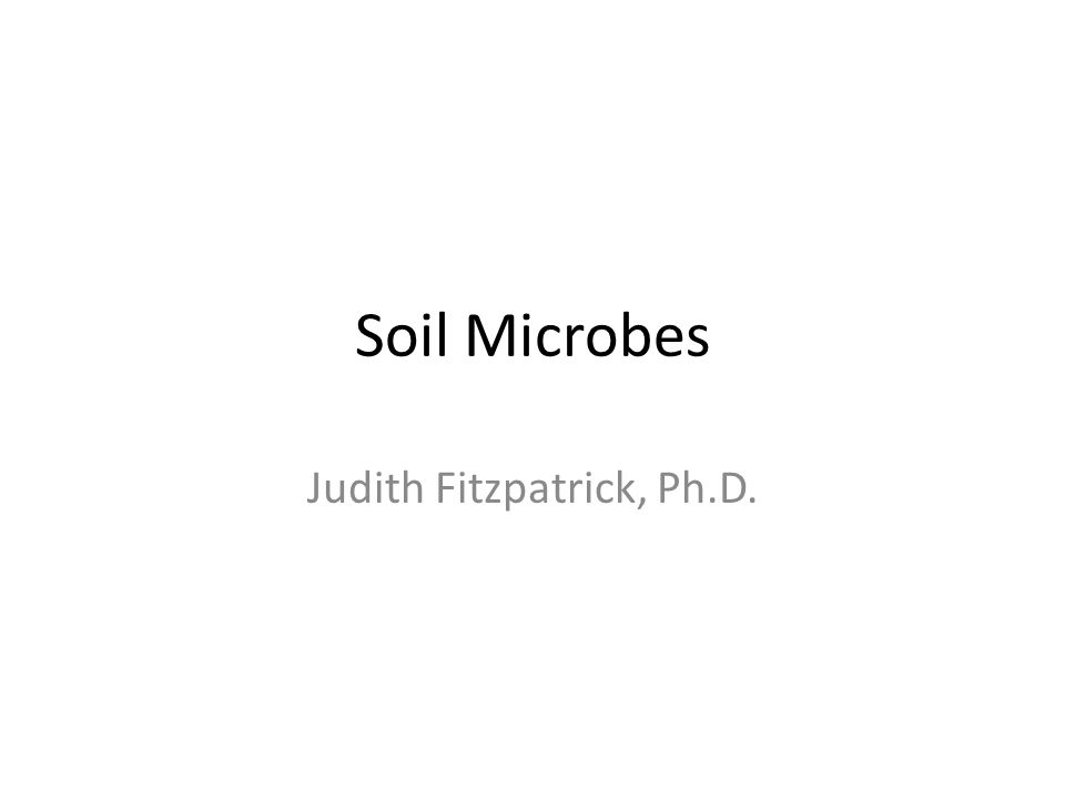 Soil Microbes Judith Fitzpatrick, Ph.D.