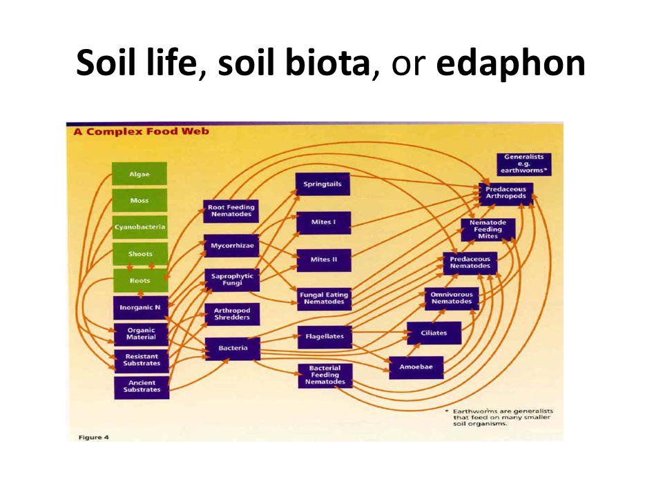 Soil life, soil biota, or edaphon Click here to enter text.