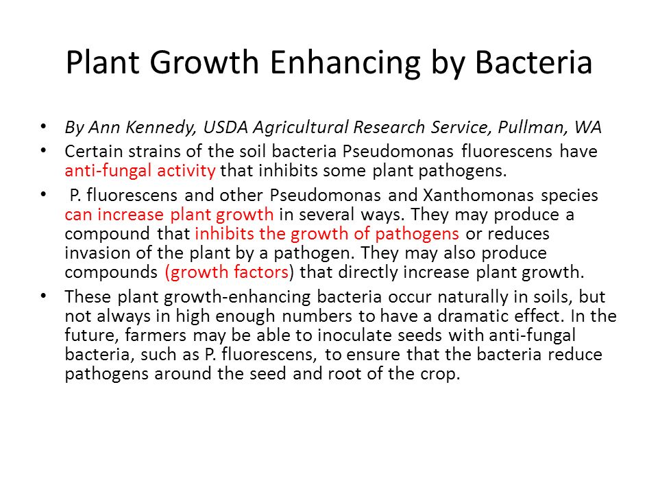 Plant Growth Enhancing by Bacteria By Ann Kennedy, USDA Agricultural Research Service, Pullman, WA Certain strains of the soil bacteria Pseudomonas fl