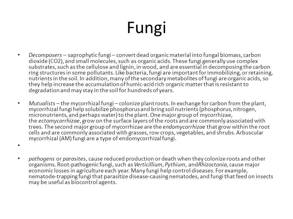 Fungi Decomposers – saprophytic fungi – convert dead organic material into fungal biomass, carbon dioxide (CO2), and small molecules, such as organic