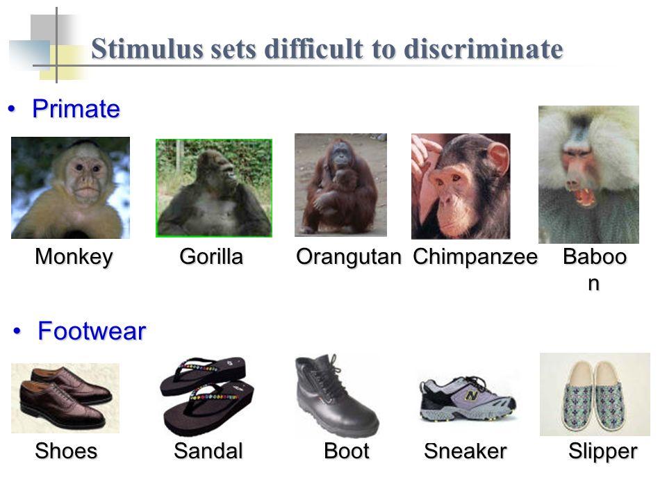 Stimulus sets difficult to discriminate ShoesSandalBootSneakerSlipper FootwearFootwear MonkeyGorillaOrangutanChimpanzee Baboo n PrimatePrimate