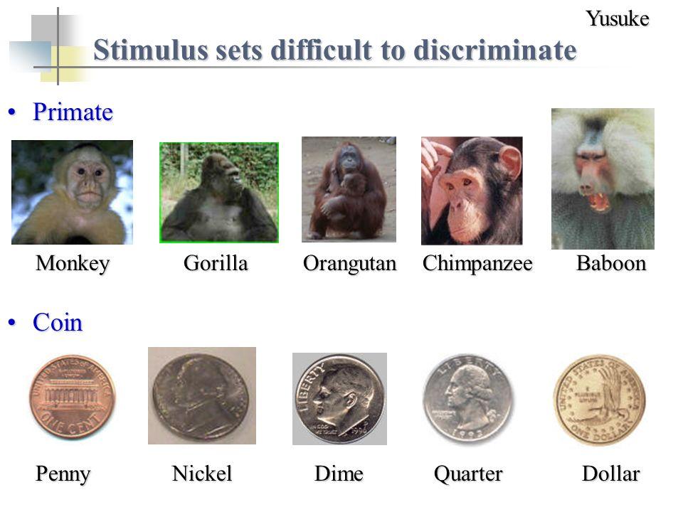 Stimulus sets difficult to discriminate MonkeyGorillaOrangutanChimpanzeeBaboon PrimatePrimate PennyNickelDimeQuarterDollar CoinCoinYusuke