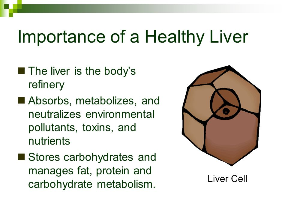 Importance of a Healthy Liver The liver is the bodys refinery Absorbs, metabolizes, and neutralizes environmental pollutants, toxins, and nutrients St