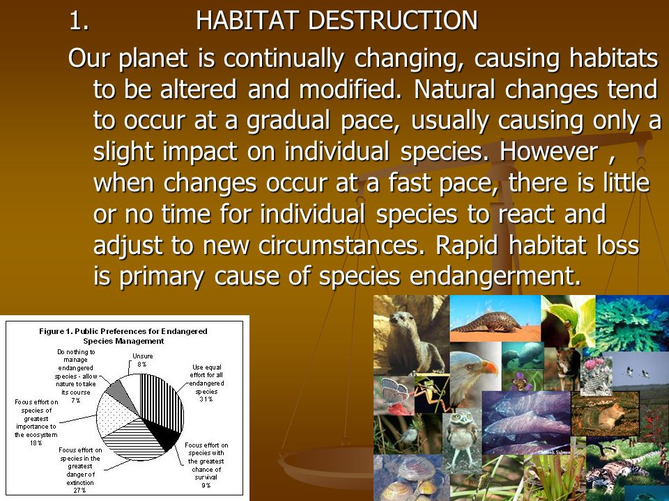 1. HABITAT DESTRUCTION Our planet is continually changing, causing habitats to be altered and modified. Natural changes tend to occur at a gradual pac