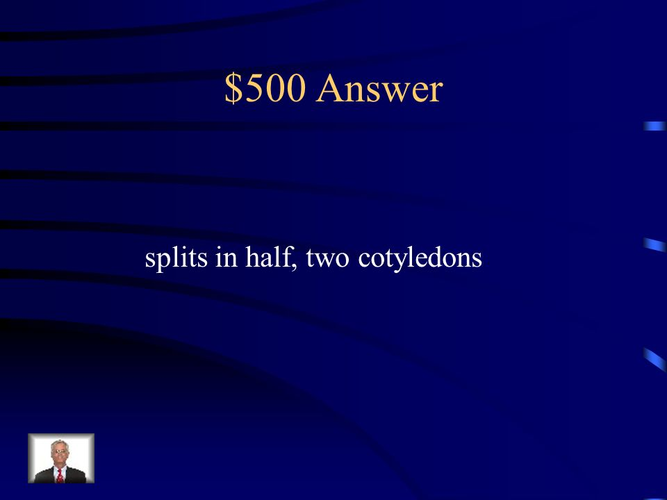 $500 Question Explain why a lima bean is a dicot.