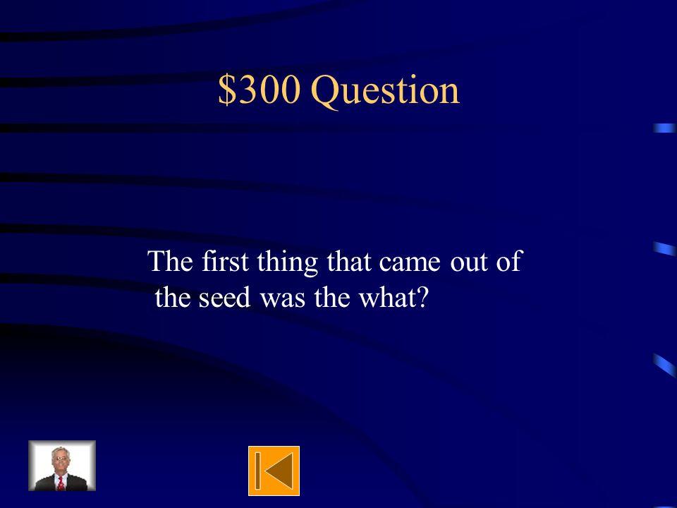 $200 Answer Mold