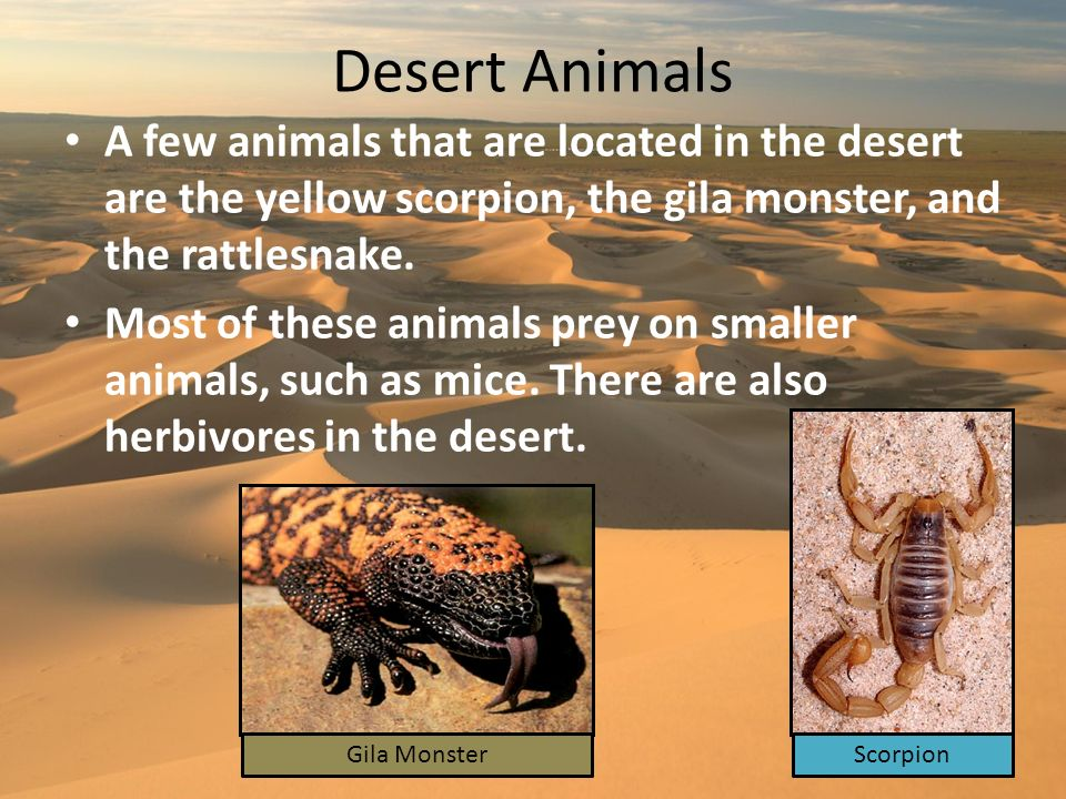 Desert Animals A few animals that are located in the desert are the yellow scorpion, the gila monster, and the rattlesnake. Most of these animals prey