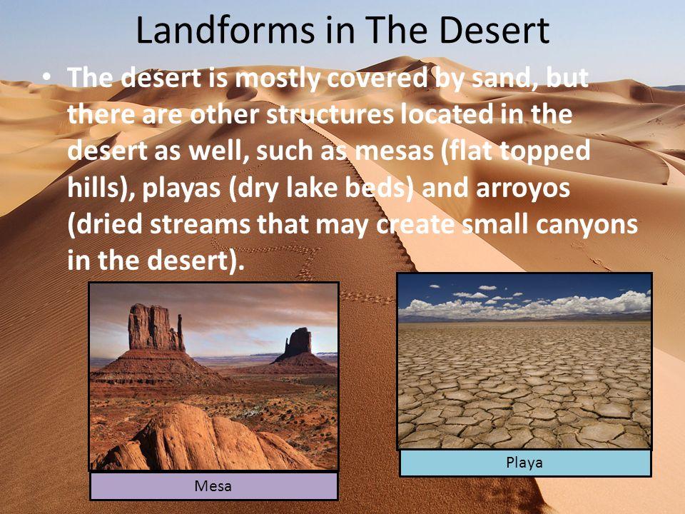 How Much Rain Falls in The Desert.The desert receives less than 10 inches of rain each year.