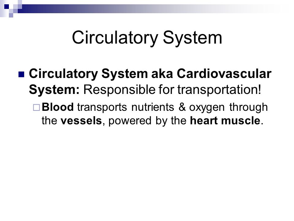 Circulatory System Circulatory System aka Cardiovascular System: Responsible for transportation! Blood transports nutrients & oxygen through the vesse