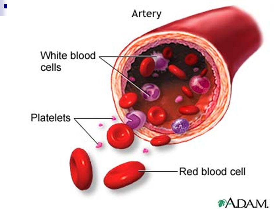 Platelets Platelets: Cell fragments.