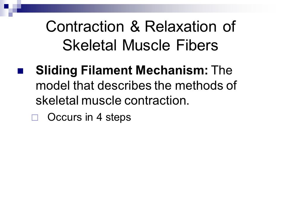Contraction & Relaxation of Skeletal Muscle Fibers Sliding Filament Mechanism: The model that describes the methods of skeletal muscle contraction. Oc