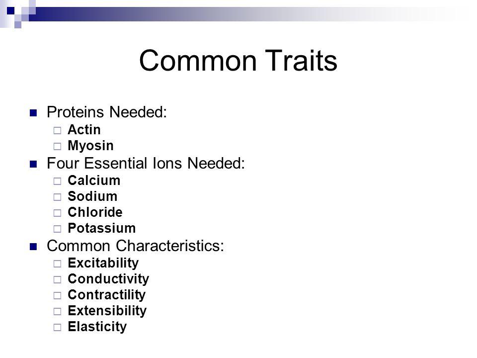 Common Traits Proteins Needed: Actin Myosin Four Essential Ions Needed: Calcium Sodium Chloride Potassium Common Characteristics: Excitability Conduct