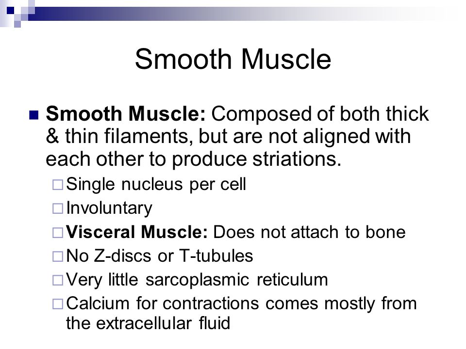 Smooth Muscle Smooth Muscle: Composed of both thick & thin filaments, but are not aligned with each other to produce striations. Single nucleus per ce