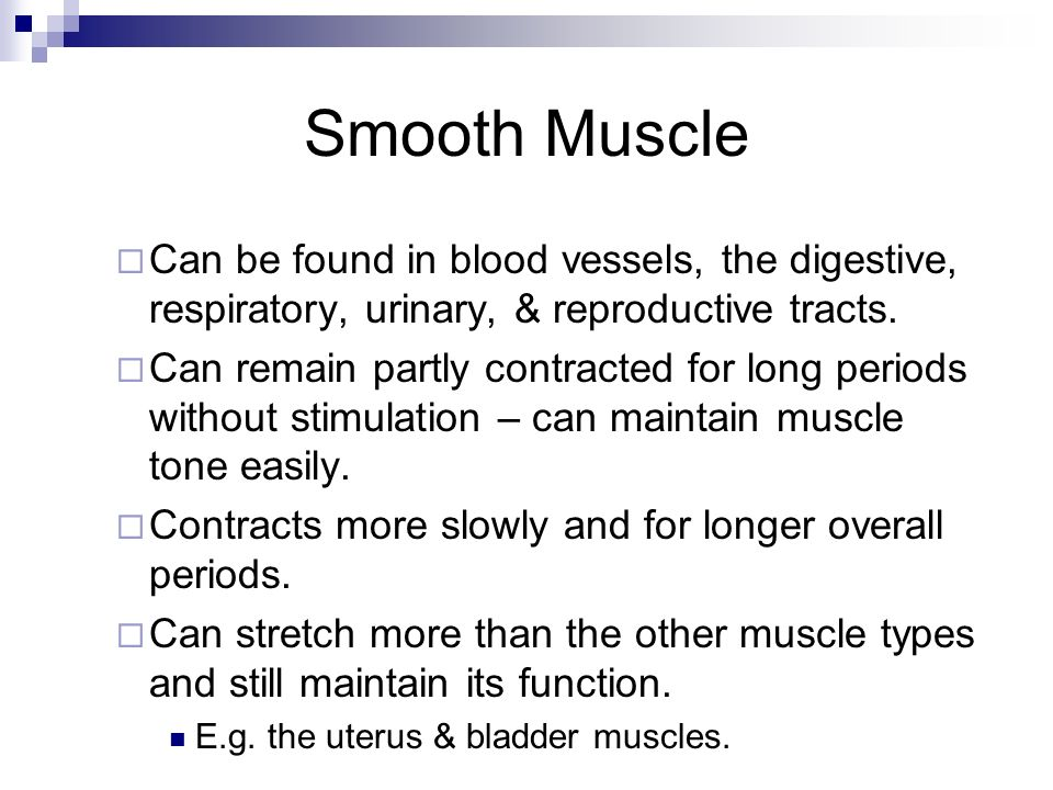 Smooth Muscle Can be found in blood vessels, the digestive, respiratory, urinary, & reproductive tracts. Can remain partly contracted for long periods
