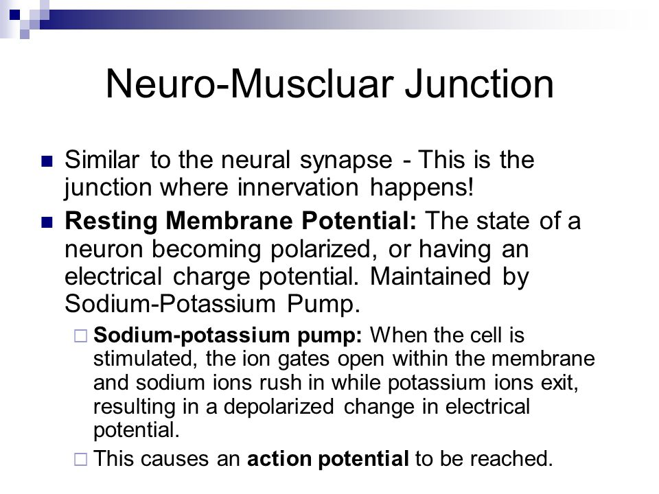 Neuro-Muscluar Junction Action Potential (AP): The nerve signal transmitted from the axon of the nerve to the muscle tissue.