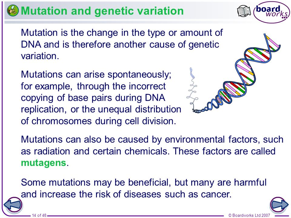 14 of 48© Boardworks Ltd 2007 Mutation and genetic variation Mutation is the change in the type or amount of DNA and is therefore another cause of gen