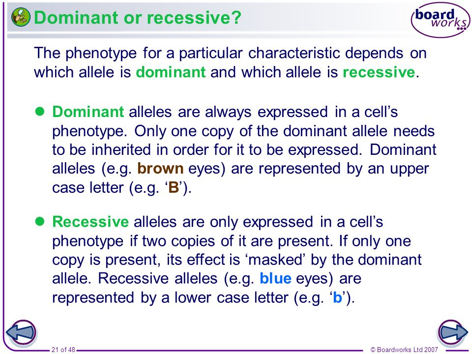 21 of 48© Boardworks Ltd 2007 Dominant or recessive? Dominant alleles are always expressed in a cells phenotype. Only one copy of the dominant allele
