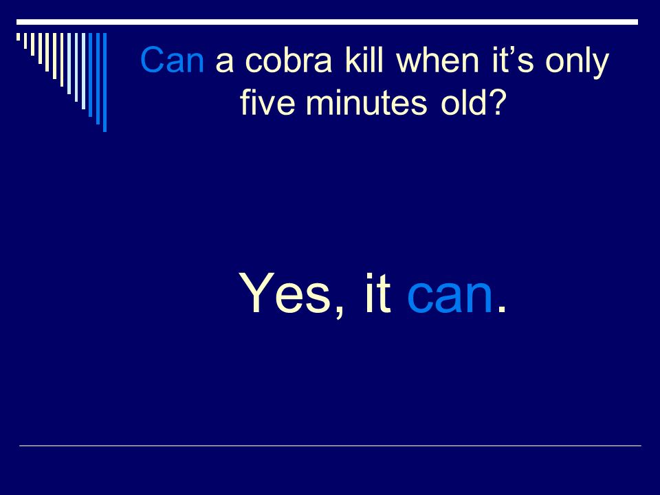 Can a cobra kill when its only five minutes old Yes, it can.